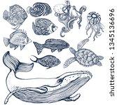 sea animals set  tropical fish  ... | Shutterstock .eps vector #1345136696