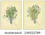 spicy herbs. collection of... | Shutterstock . vector #134522789