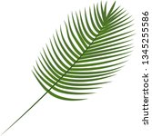 robilini  date palm. tropical... | Shutterstock .eps vector #1345255586