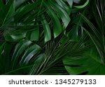 tropical palm  monstera leaves... | Shutterstock . vector #1345279133