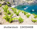 vineyard on cap de peyrefite...