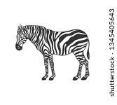zebra isolated on white. vector ... | Shutterstock .eps vector #1345405643