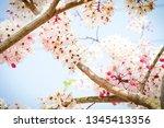 summer flowers in clear skies | Shutterstock . vector #1345413356
