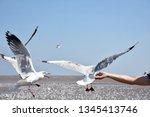 hand of traveler giving food... | Shutterstock . vector #1345413746