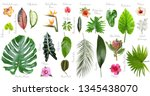 set of beautiful tropical... | Shutterstock . vector #1345438070