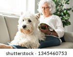 the therapy pet on couch next... | Shutterstock . vector #1345460753
