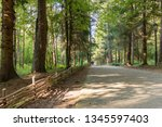footpath in the forest  russia  ... | Shutterstock . vector #1345597403