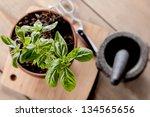 fresh basil plant in terracotta ... | Shutterstock . vector #134565656
