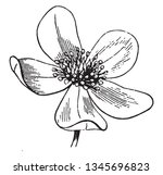 a picture is showing anemone... | Shutterstock .eps vector #1345696823