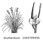 a picture of habit and portion...   Shutterstock .eps vector #1345709450