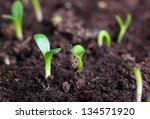 small green seedling in the... | Shutterstock . vector #134571920