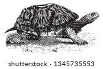 Box Tortoises Are North...
