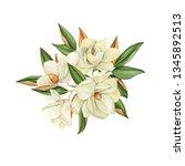 magnolia flowers  watercolor... | Shutterstock . vector #1345892513