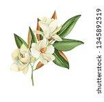 magnolia flowers  watercolor... | Shutterstock . vector #1345892519