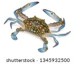 Crab Isolated On White...