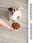 woman feeding her cute dog at... | Shutterstock . vector #1345959440