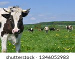 cow on a summer pasture | Shutterstock . vector #1346052983
