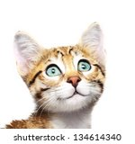 Stock photo cute kitten looking up 134614340