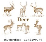 nature objects. vintage... | Shutterstock .eps vector #1346199749