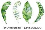 watercolor monstera leaves set. ... | Shutterstock . vector #1346300300