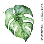 watercolor monstera leaf.... | Shutterstock . vector #1346301146
