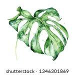 watercolor monstera leaf.... | Shutterstock . vector #1346301869