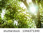 sunlight ray with tree branch... | Shutterstock . vector #1346371340