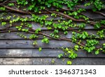 green leaf ivy on wood board... | Shutterstock . vector #1346371343
