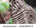 closeup view of details of a... | Shutterstock . vector #1346389619
