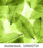 Seamless  Green Leaves...