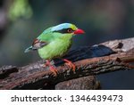 common green magpie  it is a... | Shutterstock . vector #1346439473
