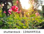flowers and natural light from... | Shutterstock . vector #1346449316