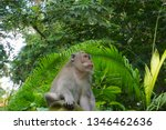monkey sitting on a stone... | Shutterstock . vector #1346462636