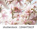 beautifull light pink magnolia... | Shutterstock . vector #1346473619