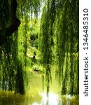 close up of weeping willow tree ... | Shutterstock . vector #1346485310
