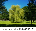 close up of weeping willow tree ... | Shutterstock . vector #1346485313