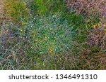 green mosses  light grass ... | Shutterstock . vector #1346491310