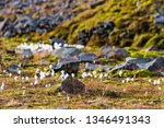 green mosses  light grass ... | Shutterstock . vector #1346491343
