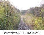family tour. dog walking | Shutterstock . vector #1346510243
