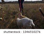 family tour. dog walking | Shutterstock . vector #1346510276