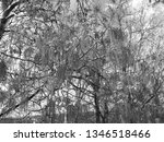 close up of weeping willows... | Shutterstock . vector #1346518466
