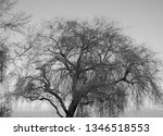 close up of weeping willows... | Shutterstock . vector #1346518553