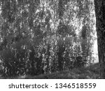 close up of weeping willows... | Shutterstock . vector #1346518559
