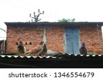 pigeons and their extended... | Shutterstock . vector #1346554679