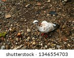 pigeons and their extended... | Shutterstock . vector #1346554703