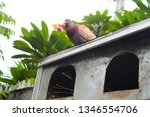 pigeons and their extended... | Shutterstock . vector #1346554706