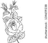black silhouette of rose... | Shutterstock .eps vector #134659238