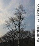 birch tree in the autumn park. | Shutterstock . vector #1346648120