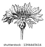 the picture showing the...   Shutterstock .eps vector #1346665616