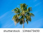 tropical palm tree with moon in ... | Shutterstock . vector #1346673650